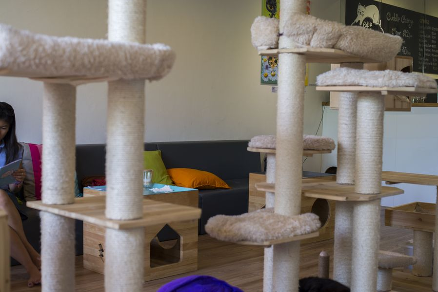 Neko no Niwa cat cafe in Singapore