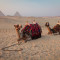 One bus, two camels and a marriage proposal
