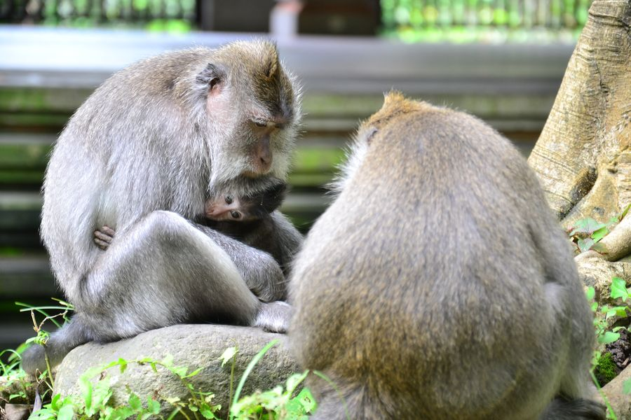 Sacred Monkey Forest Ubud Indonesia
