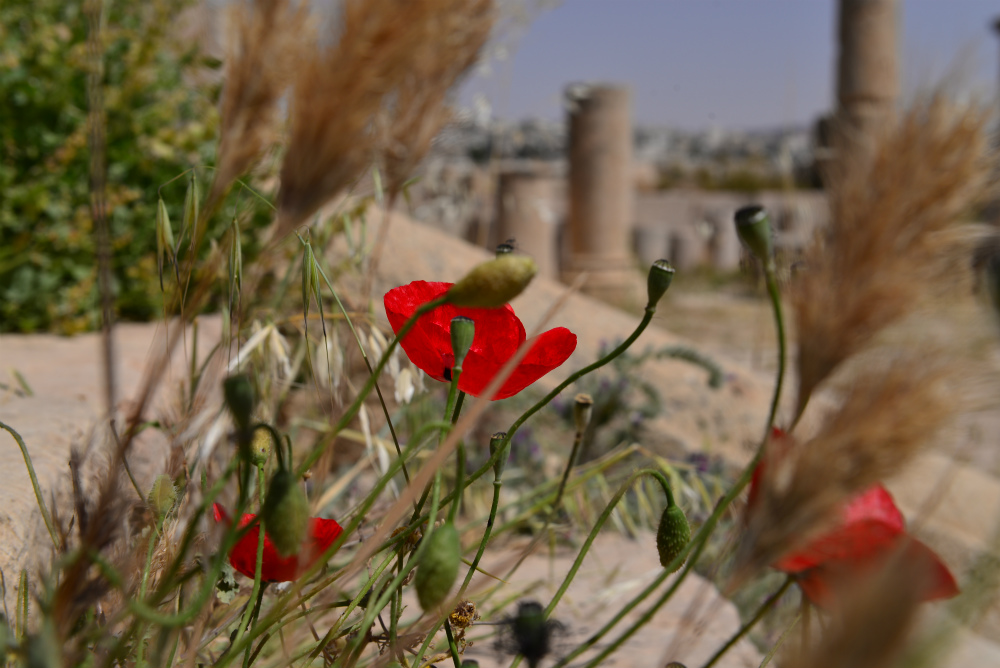 Thigs_To_Do_In_Jerash